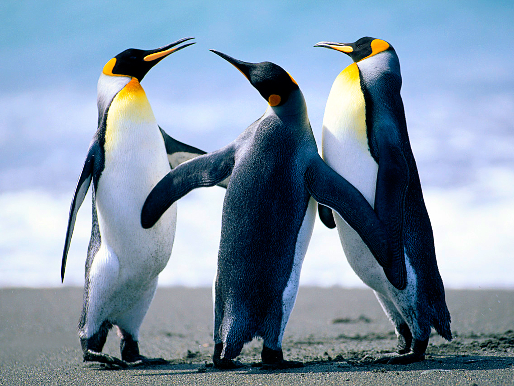 Penguins - This image will be cropped by the FullWidth template. Look at the parameters after [Content:Image] in the template.